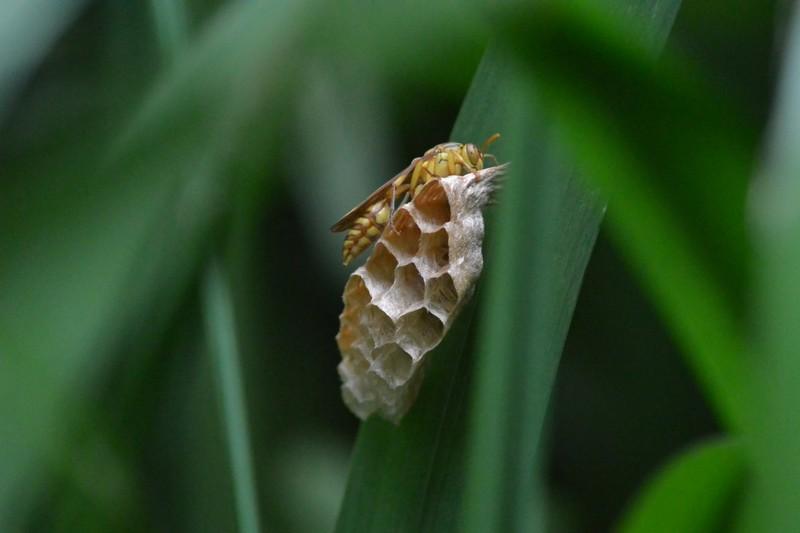 大町自然観察園の蜂の巣